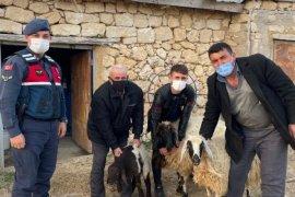 Karaman'da çalınan hayvanlar bir gecede 4 kez satıldı