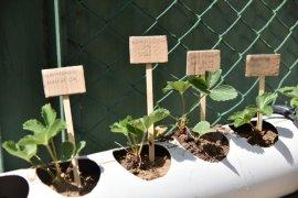 Işık Ailesinden 'Sevgiyle Tarım Projesine' Gönülden Destek