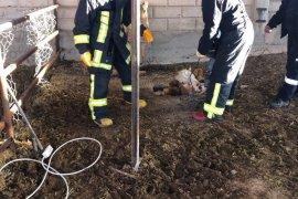 Karaman'da kuyuya düşen inek itfaiye ekiplerince kurtarıldı