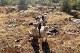 Jandarma kayıp hayvanları işte böyle buldu!