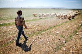 Kariyerlerini bırakıp kurdukları çiftlikte 800 hayvanlı sürünün sahibi oldular