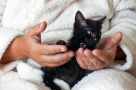 Kediye İsim Verirken Dikkat Edilecekler