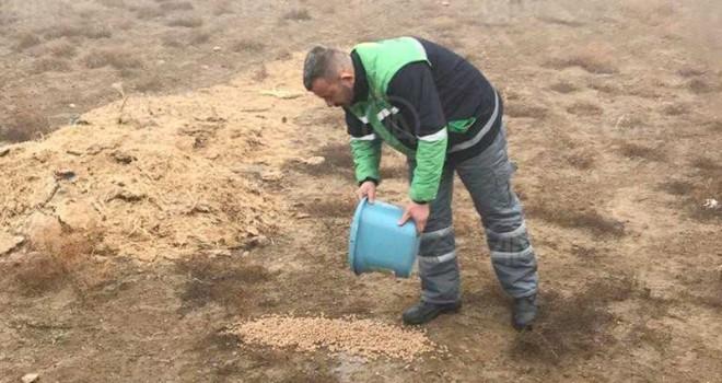 Belediye ekipleri doğaya yem bıraktı