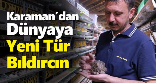 Karaman'da 2 kat daha fazla ağırlığa ulaşan bıldırcın türü geliştirildi