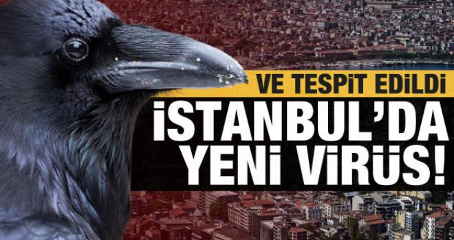 Ve tespit edildi! İstanbul'da yeni virüs