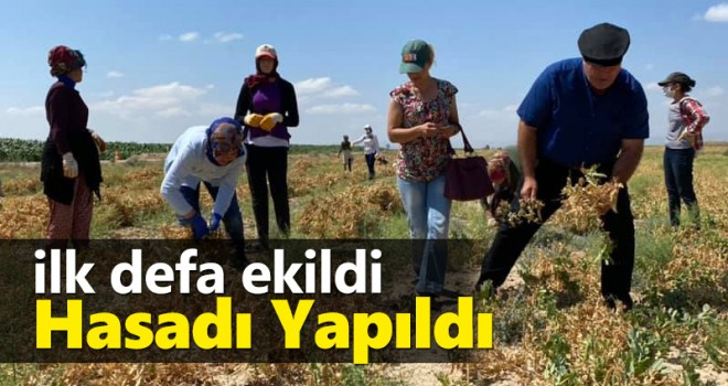 Karaman'da ilk defa ekildi, hasadı yapıldı!