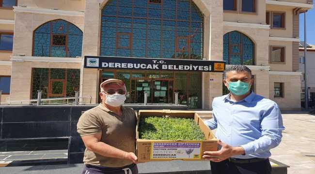 Derebucak, tıbbi aromatik üretiminde Konya'nın lideri olmayı hedefliyor