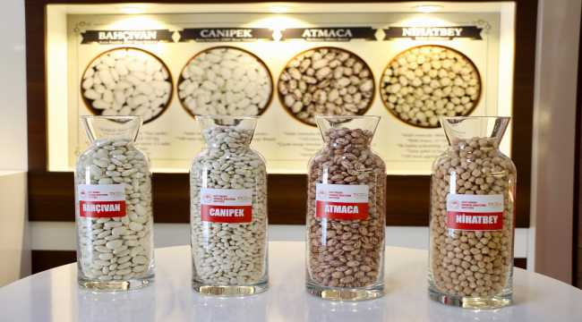 Eskişehir'de geliştirilen yeni tarımsal ürün çeşitleri tanıtıldı