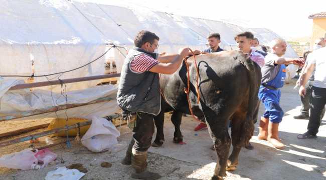 Yozgat'ta hayvan pazarlarında bayram hareketliliği