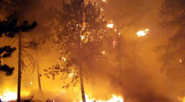 Nallıhan'da çıkan orman yangınını kontrol altına alma çalışmaları sürüyor