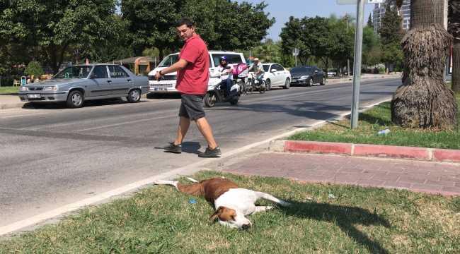 Adana'da tırın çarptığı köpek öldü