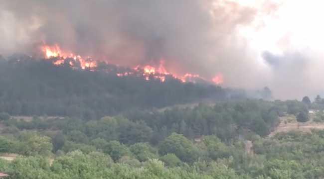 Ankara'nın Nallıhan ilçesinde orman yangını çıktı