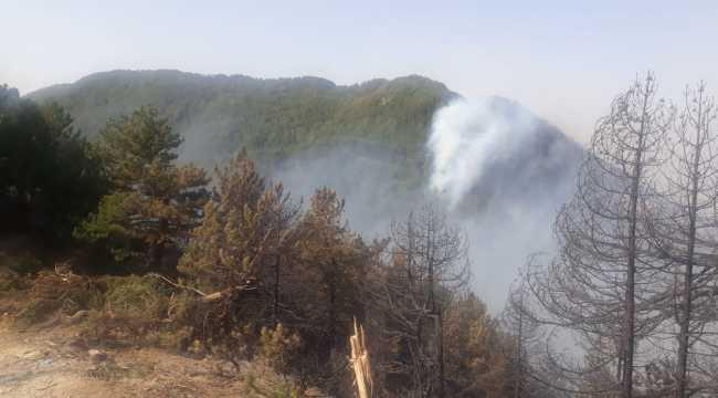 Hatay'daki orman yangını büyük ölçüde kontrol altına alındı