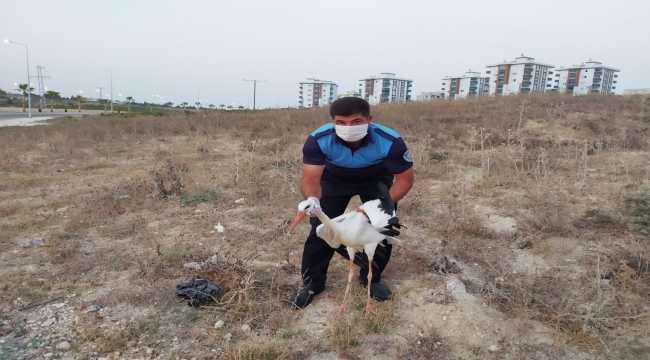 Mersin'de bulunan yaralı leylek tedaviye alındı