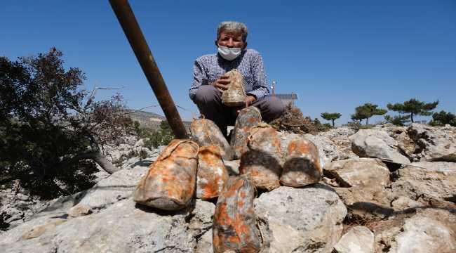 Mersin'de olgunlaşan obruk peynirleri mağaralardan çıkarılmaya başlandı