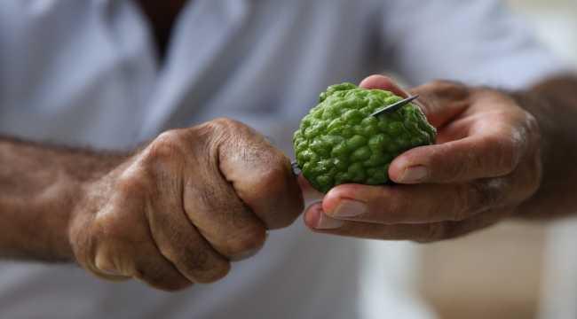 Fidanlarını aldığı ülkeye meyvelerini ihraç edecek