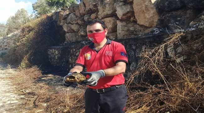 Mersin'de yangından kurtarılan kaplumbağa doğaya salındı