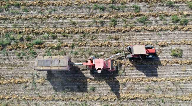 Nevşehir'de fasulyeye yönelen çiftçinin yüzü güldü