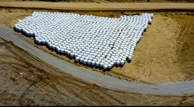 Örtü altı tarımda söz sahibi Antalya'da 300 bin tonluk silajlık mısır üretimi