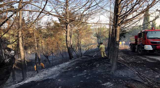 Osmaniye'de çıkan orman yangını kontrol altına alındı
