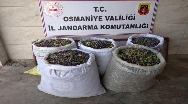 Osmaniye'de zeytinlikteki ağaçların meyvelerini çalan kişi yakalandı
