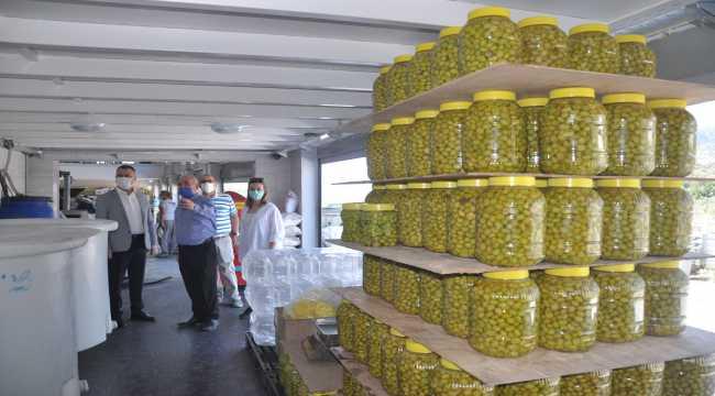 Tarsus Kaymakamı Otcu, zeytinyağı fabrikalarını inceledi