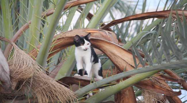 Antalya'da ağaçta mahsur kalan kedi yavrusu kurtarıldı