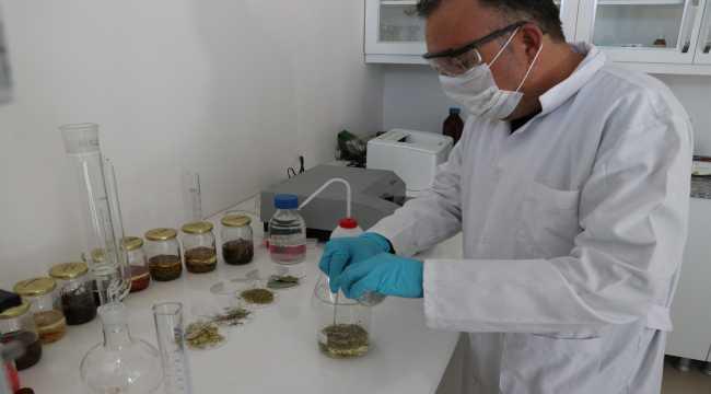 Aromatik bitki yağlarından takviye edici gıda üretildi