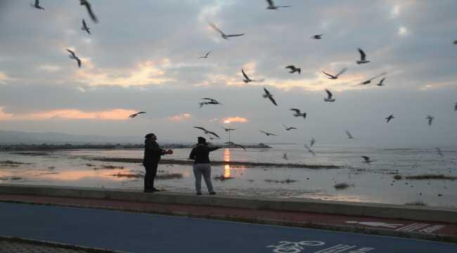 Beyşehir Gölü  kıyıları martıların akınına uğradı