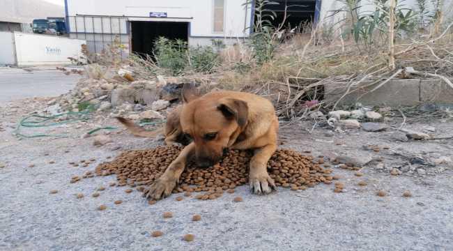 Hatay'da yangın bölgesindeki sokak hayvanlarına 1 ton mama dağıtıldı