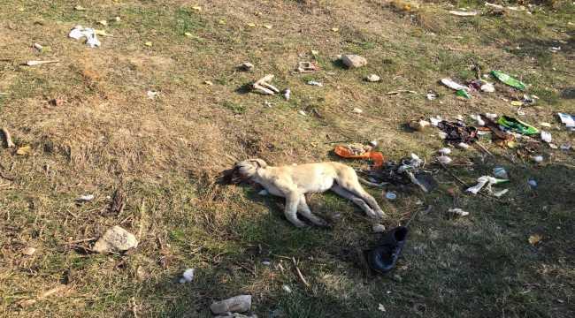 Isparta'da 4 köpek zehirlendi