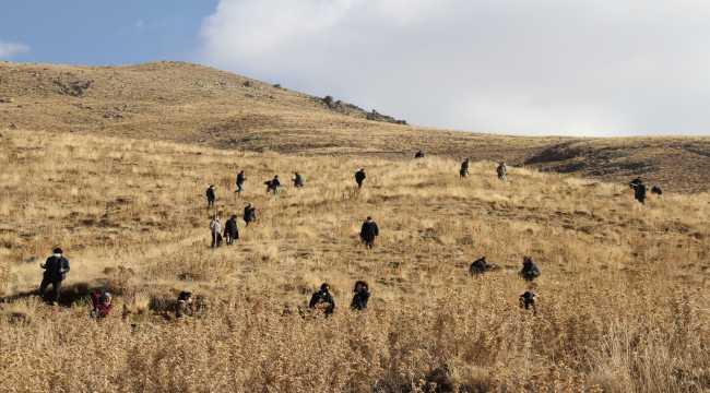 MHP teşkilatı Erciyes'e 406 fidan dikti