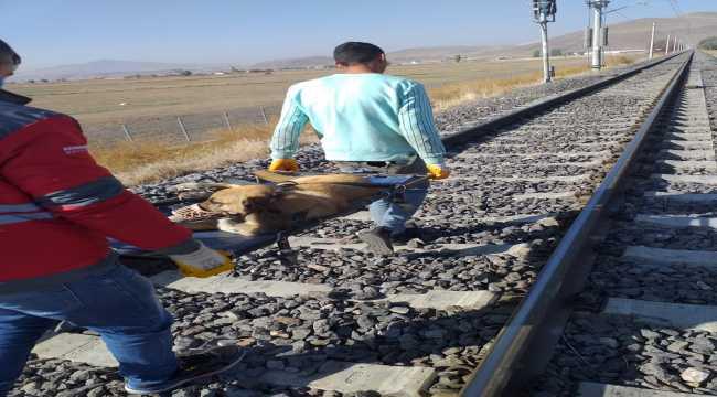 Kayseri'de trenin çarptığı köpek tedavi altına alındı