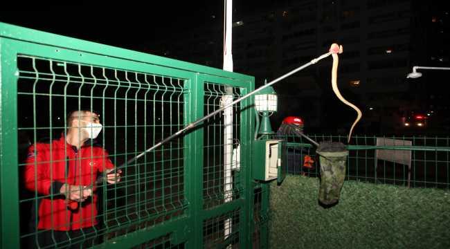 Mersin'de bir sitede yakalanan yılan doğaya bırakıldı