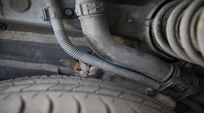 Mersin'de otomobilin kaputunda mahsur kalan kedi yavruları kurtarıldı
