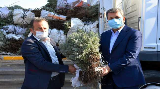 Nallıhan'da lavanta üretimine belediyeden destek