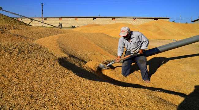 Pandemide buğdaya ilgi arttı