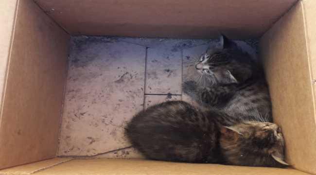 Sivas'ta otomobilin teker kısmına sıkışan yavru kediler kurtarıldı