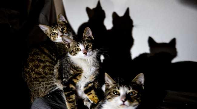 Üç kedi yavrusu emniyetin maskotu oldu