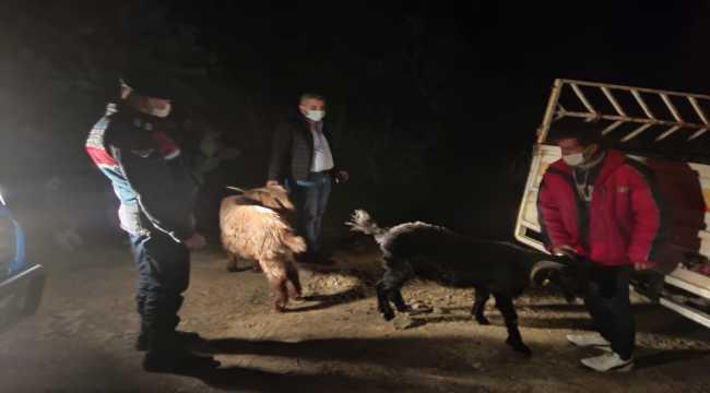Anamur'da kaybolan küçükbaş hayvanları jandarma buldu