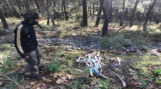 Fethiye'de ormanlık alana zehirli kemik atıldığı iddiası