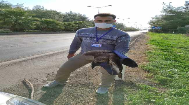 Hatay'da polislerin bulduğu yaralı şahin tedavi altına alındı