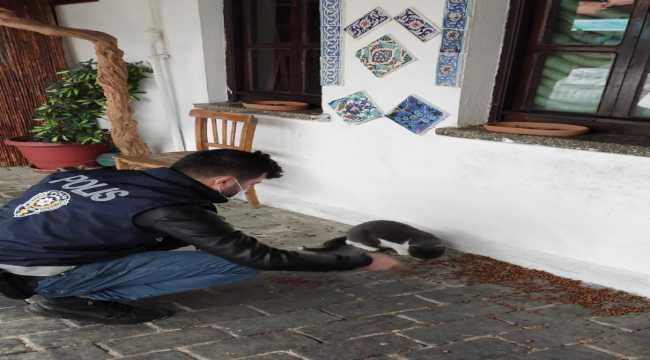 Kaş'ta sokak hayvanları için mama ve su bırakıldı