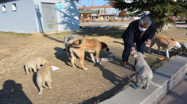 Saraykent Belediye Başkanı Öçal, sokak hayvanları için yiyecek bıraktı