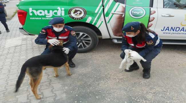 Silifke'de jandarmalar sokak hayvanlarını besledi