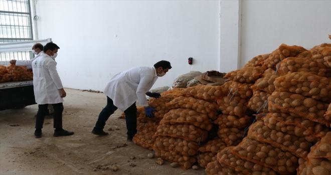 AK Partili belediyeler, çiftçiden aldıkları patatesi ihtiyaç sahiplerine dağıtacak