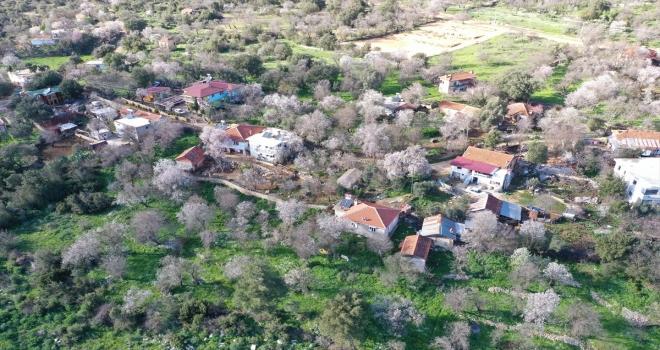 Antalya'da badem ağaçları çiçek açtı