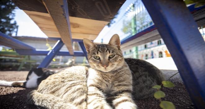 Antalya'da hayata geçirilen kedi apartmanı ile sokak kedileri güvende olacak