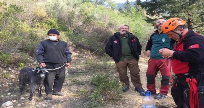 Antalya'da kayalıklarla mahsur kalan keçi kurtarıldı