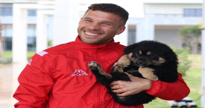Antalyaspor'un yavru köpekli Sevgililer Günü paylaşımı ilgi çekti